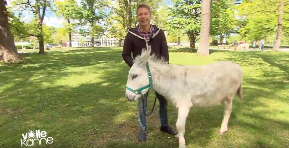 ZDF | Besserwisser | Eselsbrücke