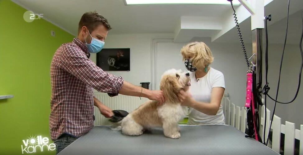 ZDF | Reportage | Flo als Hundefriseur