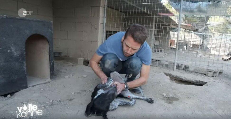 ZDF | Reportage | Florian Weiss adoptiert Hündin